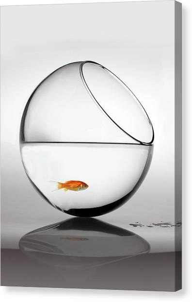 Bowl Canvas Print - Fish In Fish Bowl Stressed In Danger by Paul Strowger
