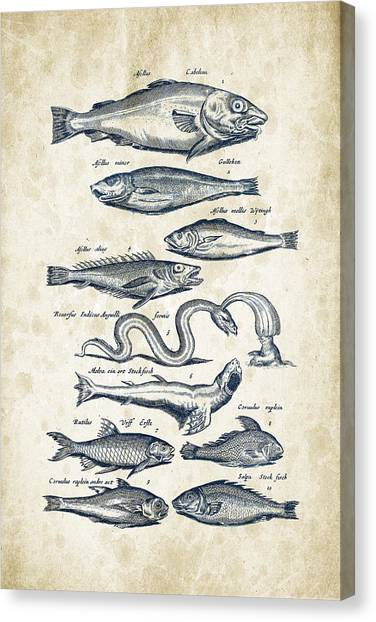 Bass Fishing Canvas Print - Fish Species Historiae Naturalis 08 - 1657 - 02 by Aged Pixel