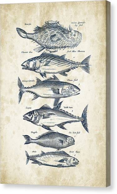 Bass Fishing Canvas Print - Fish Species Historiae Naturalis 08 - 1657 - 03 by Aged Pixel