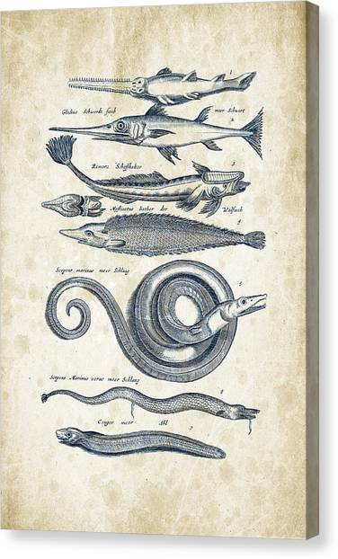 Bass Fishing Canvas Print - Fish Species Historiae Naturalis 08 - 1657 - 04 by Aged Pixel