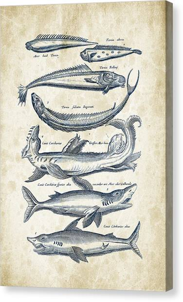 Bass Fishing Canvas Print - Fish Species Historiae Naturalis 08 - 1657 - 06 by Aged Pixel
