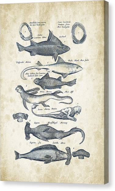 Bass Fishing Canvas Print - Fish Species Historiae Naturalis 08 - 1657 - 07 by Aged Pixel