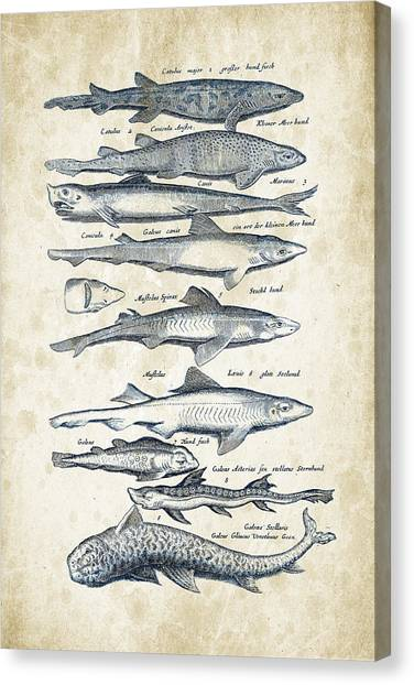 Bass Fishing Canvas Print - Fish Species Historiae Naturalis 08 - 1657 - 08 by Aged Pixel