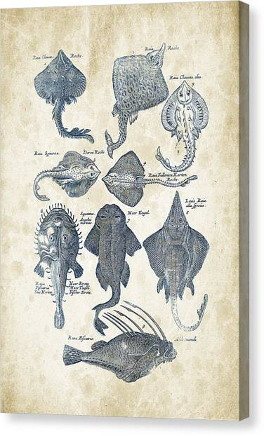 Bass Fishing Canvas Print - Fish Species Historiae Naturalis 08 - 1657 - 11 by Aged Pixel