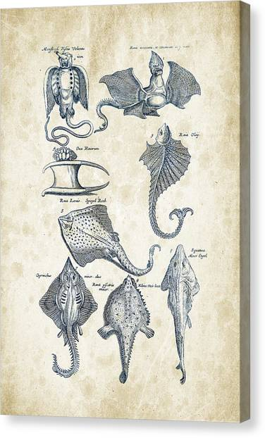 Bass Fishing Canvas Print - Fish Species Historiae Naturalis 08 - 1657 - 12 by Aged Pixel