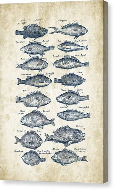 Bass Fishing Canvas Print - Fish Species Historiae Naturalis 08 - 1657 - 14 by Aged Pixel
