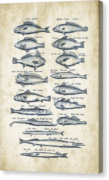 Bass Fishing Canvas Print - Fish Species Historiae Naturalis 08 - 1657 - 15 by Aged Pixel