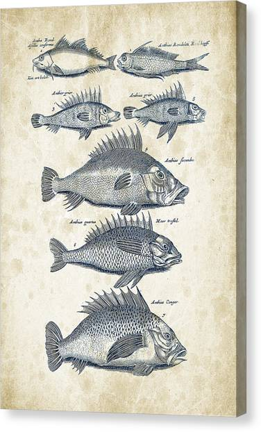 Bass Fishing Canvas Print - Fish Species Historiae Naturalis 08 - 1657 - 16 by Aged Pixel