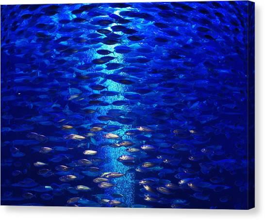Fish Tanks Canvas Print - Fish Tank by Art Spectrum