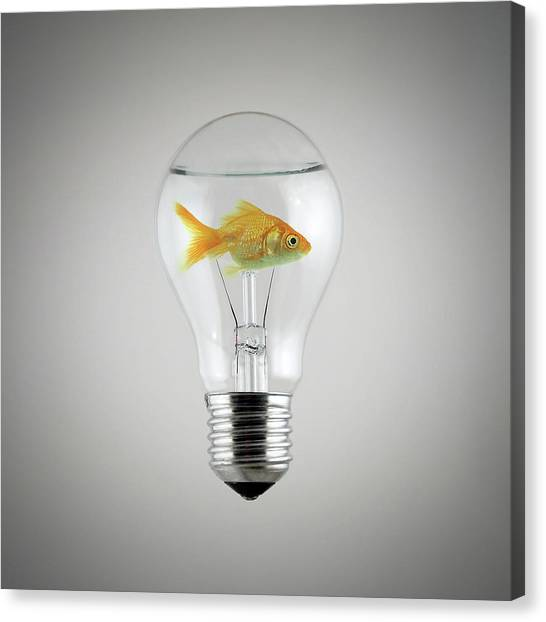 Goldfish Canvas Print - Fish by Zoltan Toth