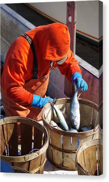 Fisherman Sorting His Catch Canvas Print