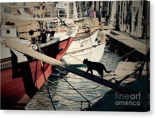 Fisherman's Cat  Canvas Print