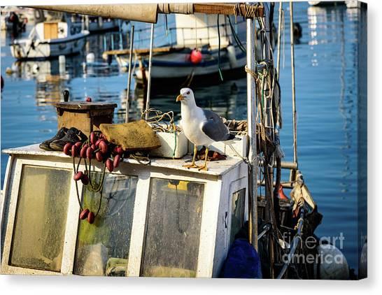 Fishing Boat Captain Seagull - Rovinj, Croatia Canvas Print