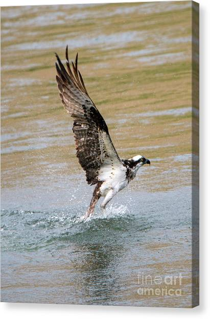 Osprey Canvas Print - Fishing The Yakima by Mike Dawson