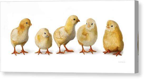 Five Chicks In A Row Canvas Print