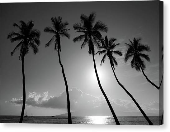 Five Coconut Palms Canvas Print