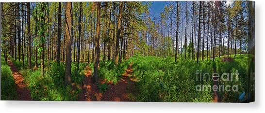 Paths, Pines 360 Canvas Print