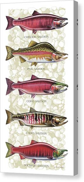 Fly Fishing Canvas Print - Five Salmon Species  by JQ Licensing