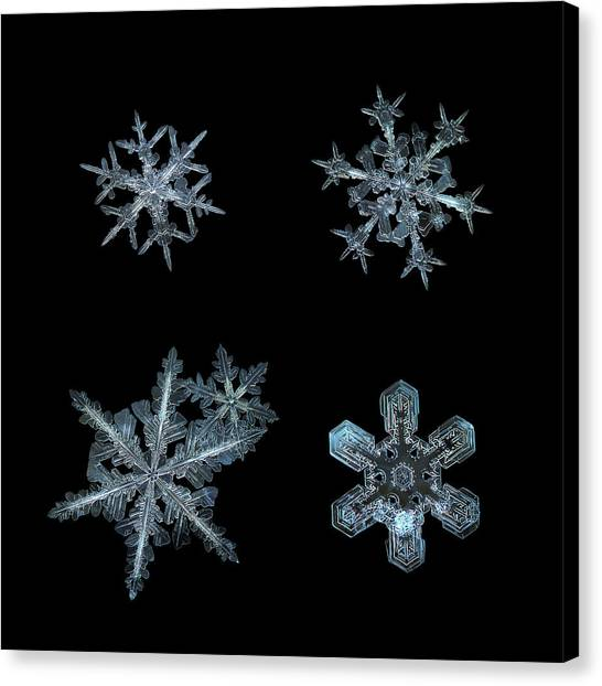 Canvas Print featuring the photograph Five Snowflakes On Black 3 by Alexey Kljatov