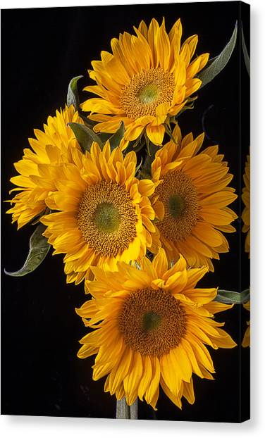Golden Canvas Print - Five Sunflowers by Garry Gay