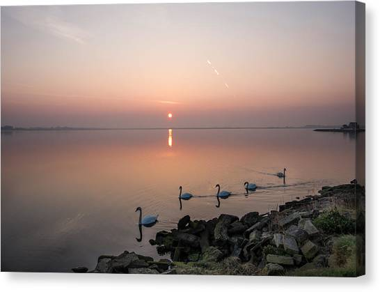 Five Swans At Dawn Canvas Print