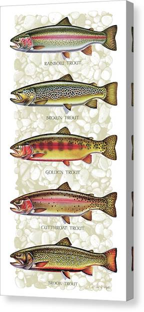 Brown Canvas Print - Five Trout Panel by JQ Licensing