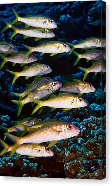 Fla-150811-nd800e-26035-color Canvas Print