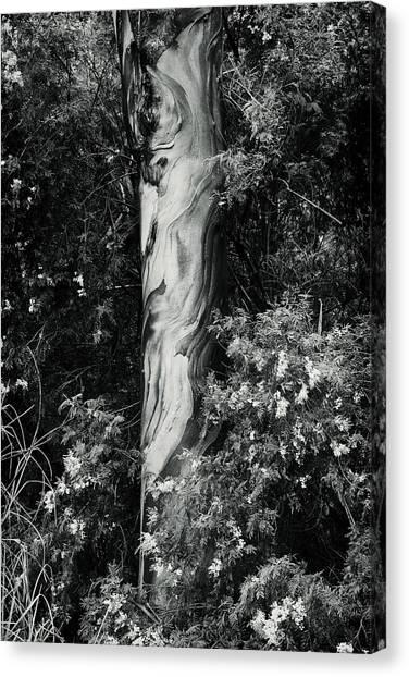 Fla-150523-nd800e-24853-bw-green Canvas Print