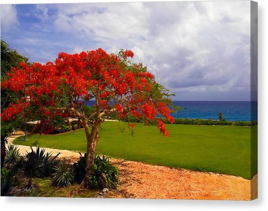 Flamboyant Tree In Grand Cayman Canvas Print