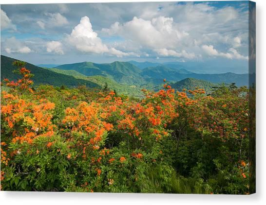 Flame Azaleas Roan Highlands Appalachian Trail Canvas Print