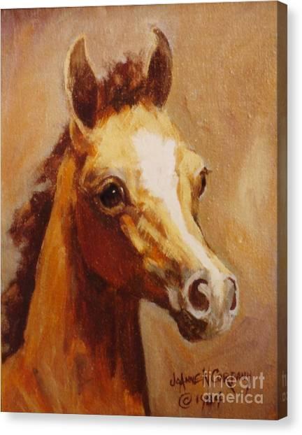 Flame Princess    Arabian Filly Portrait Canvas Print by JoAnne Corpany