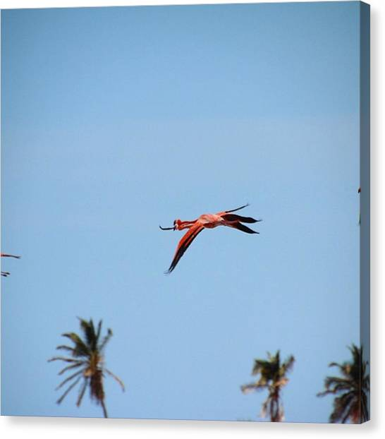 Flamenco Canvas Print - #flamenco Volando En El Santuario De by Daniel Murillo