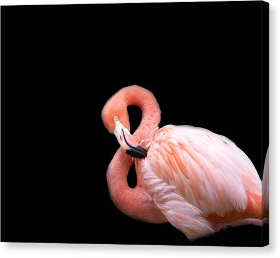 Flamingos Canvas Print - Flamingo 3 by Rebecca Cozart