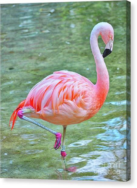 Flamingo 39 Canvas Print