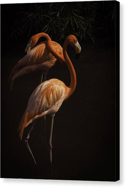 Flamingo Delight Canvas Print