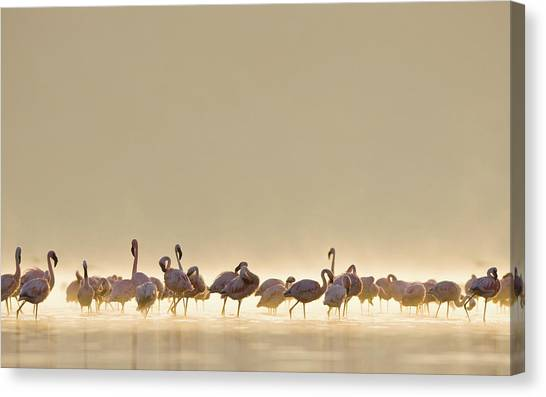 Storks Canvas Print - Flamingo by Maye Loeser