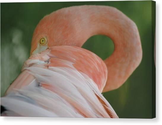 Flamingo Canvas Print by Melanie Beasley