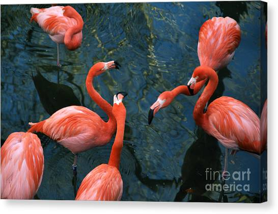 Flamingo Party 1 Canvas Print