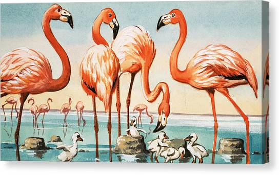 Flamingos Canvas Print - Flamingoes by English School