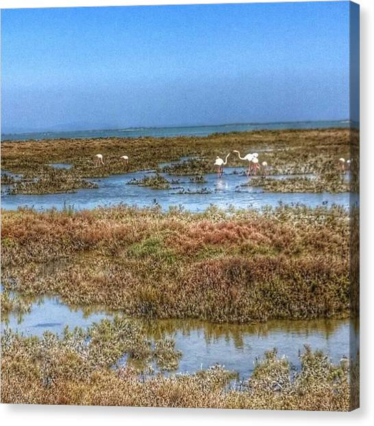 Flamenco Canvas Print - Flamingos Along Our Bicycle Route In by Marcel Imants