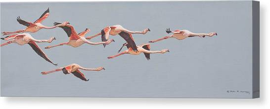 Canvas Print featuring the painting Flamingos In Flight by Alan M Hunt