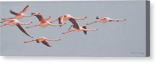Flamingos In Flight Canvas Print