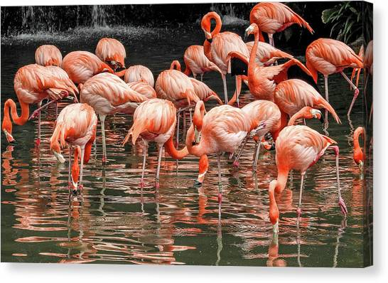Canvas Print featuring the photograph Flamingo Looking For Food by Pradeep Raja Prints