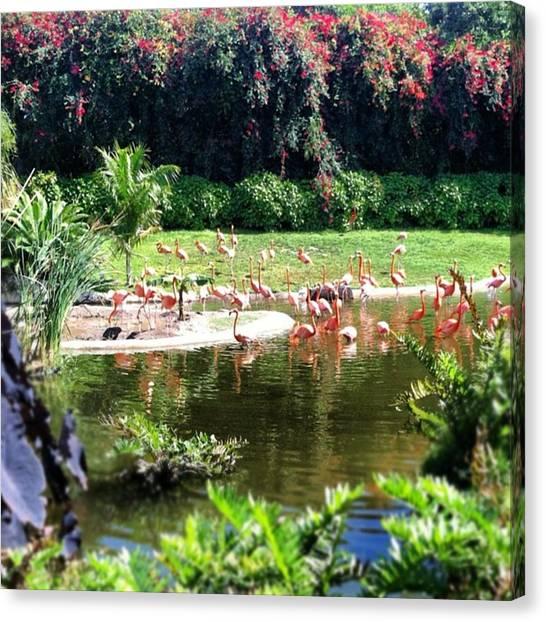 Flamingos Canvas Print - #flamingos #miami by Kaylee  Bays