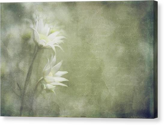 Flannel Canvas Print - Flannel Flowers by Margaret Goodwin