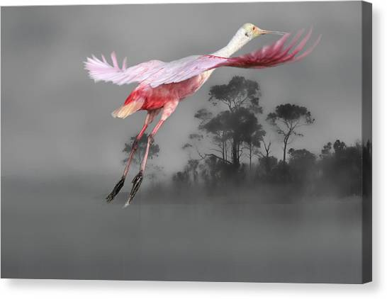 Spoonbills Canvas Print - Flash Of Pink by Donna Kennedy