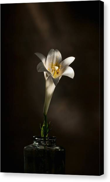 Flashlight Series Easter Lily 1 Canvas Print