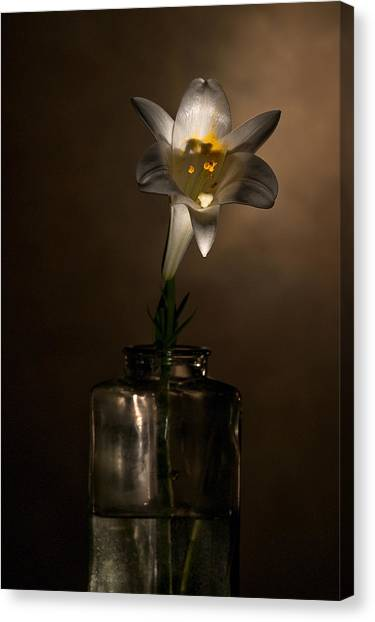 Flashlight Series Easter Lily 2 Canvas Print