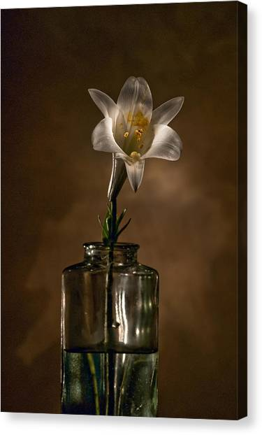 Flashlight Series Easter Lily 3 Canvas Print by Lou  Novick