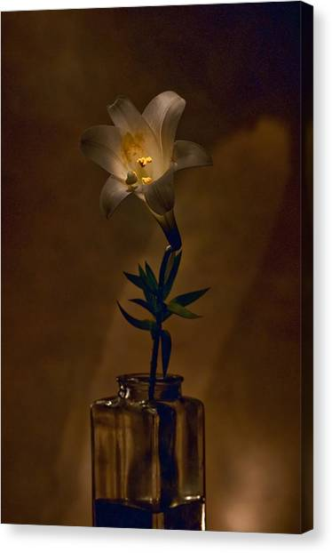 Flashlight Series Easter Lily 4 Canvas Print by Lou  Novick